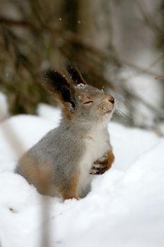 Ook dieren kunnen genieten van de sneeuw! #winter #sneeuw