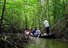 Can Gio Ecological Tour - Saigon