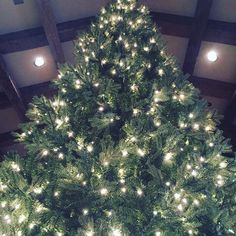 #Christmas season has begun!! Hello from #Arkansas where we are working on our first tree of the season! Fa la la!