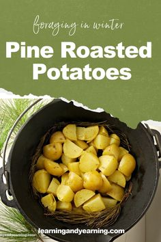 When it comes to winter and foraging, pine comes calling. Just the scent alone can bring me to a place of calm, and cooking with it adds a heavenly aroma to my kitchen. Especially when I'm cooking oven roasted potatoes on a bed of pine needles. #foraging #wildcrafting #pine #roastedpotatoes #recipe #natural #realfood #homesteading Fall Recipes, Real Food Recipes, Cooking Recipes, Yummy Food, Healthy Recipes, Tasty, Oven Roasted Potatoes, Food L, Pine Needles