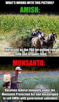 Amish harassed for selling raw#milk and organic food, #onsanto given protection under Monsanto Protections act to sell poison and #GMOs.