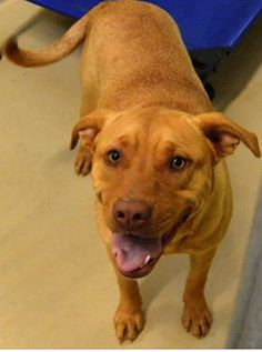 Nobody wants dog held at animal control since February