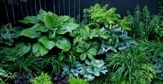 Garden design by carolyn mullet ~ Contrast and texture.   Garten   Pinterest   Gardens, Jack o'connell and Green leaves