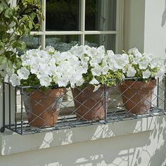Window boxes filled with different combinations of plants are a great way to add a splash of color and visual interest to your home. Beautiful gardens in miniature—that's the essential appeal of window boxes. Metal Window Boxes, Window Box Flowers, Window Box Planter, Wrought Iron Window Boxes, Window Frames, Railing Planter Boxes, Indoor Window Boxes, Diy Flower Boxes, Balcony Window