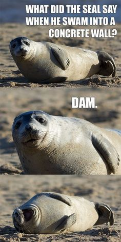 Seal Humor - Dummies of the Year shares the funniest pictures, cutest animals, and most popular videos every single day!
