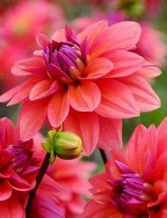 Intelligent Brighton Cote D'azur Pink Daisy Flower Custom Charm Lobster Clasp Fashion Jewelry