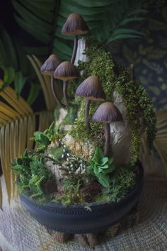 3 hongos tradicional casa de Muñecas en Miniatura Accesorio De Jardín De Hadas
