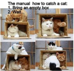 BIG CATS IN BOXES | Cat box