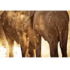"""►◄ benmcraephotography: """"This image was shot at a popular water hole in Etosha National park."""