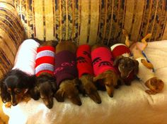 There's one in every crowd! - photo via House of Three Long Dogs fb page