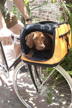 Emanuele Bianchi Bike Pet Carrier Orange Silver At 37 Off