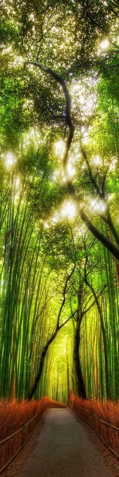 Yes, reminds me of our time in Japan - would like to go back there - so much to see. The walking paths that cut through the bamboo groves of Arashiyama Park, Kyoto, Japan (above) is one of the places I didn't get to visit. Image Nature, All Nature, Green Nature, Beautiful World, Beautiful Places, Beautiful Pictures, Nature Pictures, Beautiful Sky, Colorful Pictures