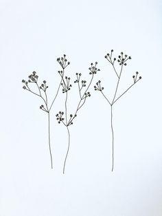 MGRobbinsDesigns. Hand drawn floral botanical cow parsley gypsophila illustration sketchbook