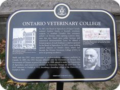 affiliated with the University of Toronto in relocated to Guelph in 1922 and was a founding college of the University of Guelph in 1964 Veterinary Colleges, Veterinary Surgeon, University Of Toronto, Ontario, Clinic, Public, School, Health, Reading