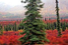 A blur of fall colors. Alaska