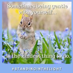 Sometimes being gentle with yourself is the kindest thing to do. Be Gentle With Yourself, Things To Do, Animals, Things To Make, Animales, Animaux, Animal, Animais