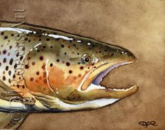 Brown Trout Art Print - Watercolor Painting - Fly Fishing Art - Signed by Artist DJ Rogers - Wall Decor Watercolor Fish, Watercolor Paintings, Watercolor Paper, Watercolours, Watercolor Ideas, Brown Trout, Kunst Poster, Rainbow Trout, Fish Art