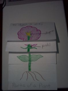 """To use with the story """"From Seed to Plant"""" by Gail Gibbons (Treasures)"""