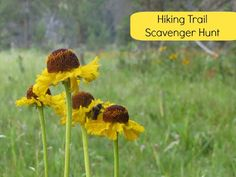 [Guest Post] An Exclusive Mommy Hiker Hiking Trail Scavenger Hunt by @Debi Huang   www.MommyHiker.com #OutdoorFamilies