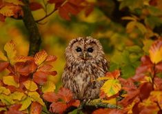 England's Big Picture: 28 October - 3 November - BBC News Sutton Park, England Countryside, 28th October, Picture Boards, Free To Use Images, British Wildlife, Bird Theme, Image Caption, West Midlands