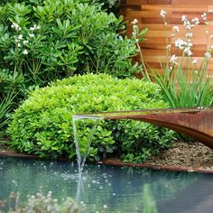It's Friday! A relaxing water feature surrounded by libertia and pittosporum is all we need