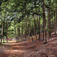 Un lugar para perderse, un lugar para encontrarse, un lugar de paz y armonía. Bosque de hayas en la Sierra de Lokiz #Navarra --> http://www.turismo.navarra.es/esp/organice-viaje/recurso/Patrimonio/4482/Sierra-de-Loquiz.htm (Foto @1947juan en #Instagram)