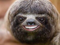 This. 20 Animals With Joe Biden's Teeth (PHOTOS)