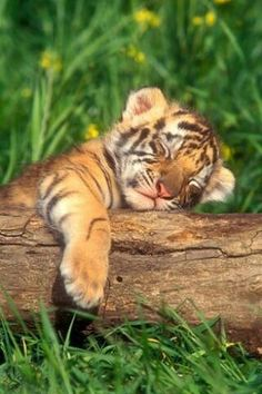 Just let me have a nap. I'm too young to hunt.