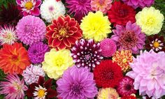 Finding flowers in the summer month of July can be hard if you do not know various species of flowers in this season. Here are some best wedding flowers of July.