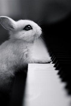 The piano bunny