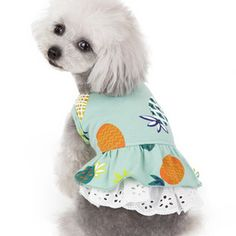 undefined Big Dog Toys, Funny Dog Toys, Dog Grooming Shop, Dog Grooming Business, Dog Food Stands, Small Dog Clothes Patterns, Dog Breeds Little, Dog Training Equipment, Dog Training School