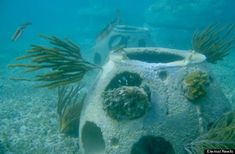 Reef Ball Green Burial System Could Help Restore Damaged Ecosystems. Ashes to Ashes, Dust to Life. ♥