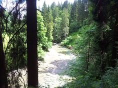 The forests and rivers in Upper Allgäu