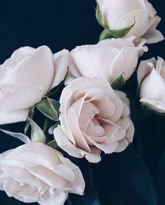 These beauties, happy weekend everyone!  #roses #flowers #blooms