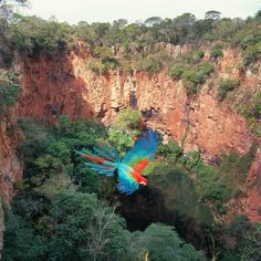 Beautiful parrot flying in Bonito - #Brazil