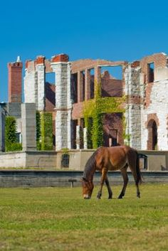 Dungeness Ruins and wild horses are the two most sought out and beautiful sights on the National Park of Cumberland Island , Georgia USA. Georgia Usa, Georgia On My Mind, Georgia Islands, Island Horse, Cumberland Island, Jekyll Island, Picture Places, Wild Horses, Adventure Awaits