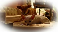 "Beverly Hills Chihuahua 3 - Official Movie Clip ""Kibbles"" (2012) HD"