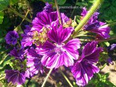 Meine Blüten-Ernte! My flower harvest #gardening #flowers