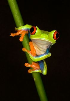 TREE FROGS | Adventures in Close-Up Photography « Layers Magazine
