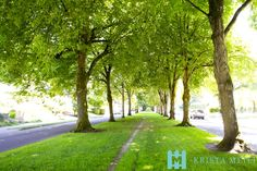 This tree-lined street has become an iconic landmark and image for the beautiful Eastmoreland Neighborhood. Portland, Oregon. Photographed by @KandyPhoto