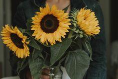 SARAH   Photographer (@fotografierende) • Instagram-Fotos und -Videos Instagram Accounts, Nature Photos, Videos, Plants, Pictures, Photography, Photos, Flora, Plant