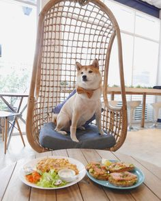 I am BALD! Yes! i feel! but much ! Woof! The scrambled and Avocado toast was delicious:) Happy tummy happy doge  Another spot that allows me and pawfriends to come! #shibastagram #dogsandpals #shiba #dog  #dogsofinstagram #dogsofindonesia #shibastagram #cute #fashion #jakarta #puppy #anjingdijual #lacyandpaws #love #dog #kawai #doge #friends #dogoftheday #shibalove #instanice #puppy #dogsandpals #silly #dog#thursday #indonesia #jakarta#candid by notsteveaoki