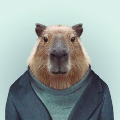 #animal #portrait #creativity #photography