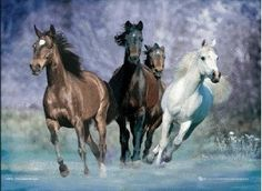 """""""There is a wild horse enjoying the freedom of the open range in every human heart,""""~~'Supa' from Sheldan Nidle's book 'Your Galactic Neighbors'."""