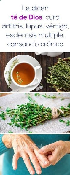 Le dicen té de Dios, cura artitris, lupus, vertigo, esclerosis multiple, cansancio cronico. Need To Lose Weight, Weight Gain, Arthritis, Scarsdale Diet, Kinds Of Diseases, Speed Up Metabolism, Different Diets, Natural Home Remedies, Healthy Choices