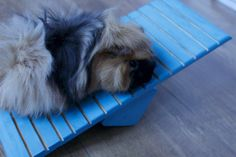 See-Saw for guinea pigs! It's so adorable to see them using it! Made from pet safe wood and paints.