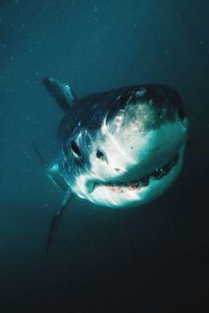 aacaa5a185ba wolverxne  Smile - by    Morne Hardenberg   Orcas