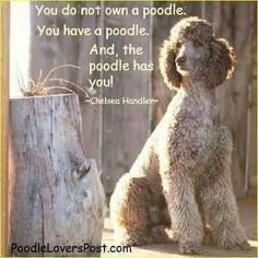 Click the following link - http://www.mobilehomemaintenanceparts.com/dogcaresupplies.php - to learn about the supplies and training needed to take care of a pet poodle.