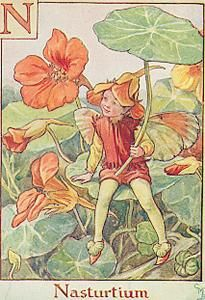 N is For Nasturtium- by Cicely Mary Barker