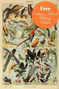 This is a fabulous free printable collection of natural history posters. More sp. This is a fabulous free printable collection of natural history posters. More specifically, birds, insects and butterfly posters by Adolphe Millot. Vintage Prints, Vintage Posters, History Posters, Image Nature, Botanical Prints, Botanical Drawings, Botanical Posters, Free Graphics, Nature Prints